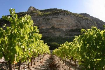 escalette,pas,vin,zernott,rousseau,languedoc,larzac